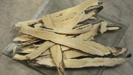 The root of astragalus plants is used for medicinal purposes.