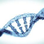 Gene-editing tool repairs hypertrophic cardiomyopathy gene