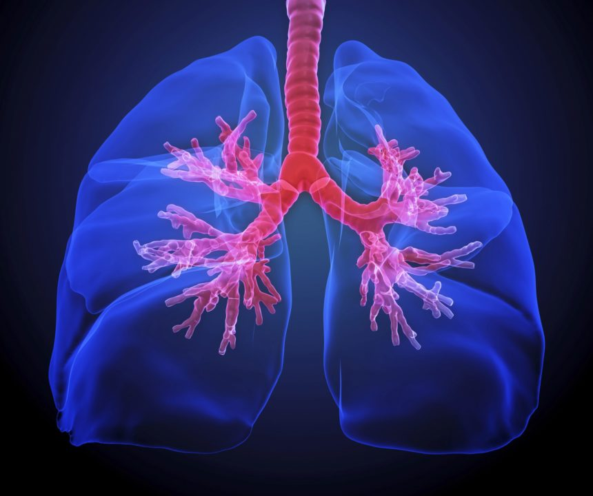 Imagine showing human lungs highlighting the bronchi